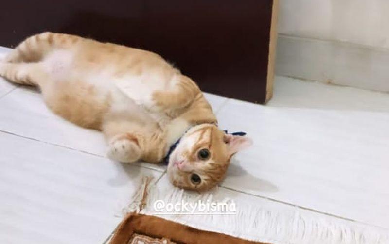 https: img.okezone.com content 2021 02 08 406 2358675 kisah-kucing-malang-okky-bisma-kini-temani-aldha-refa-JYhF2uDDKK.jpg