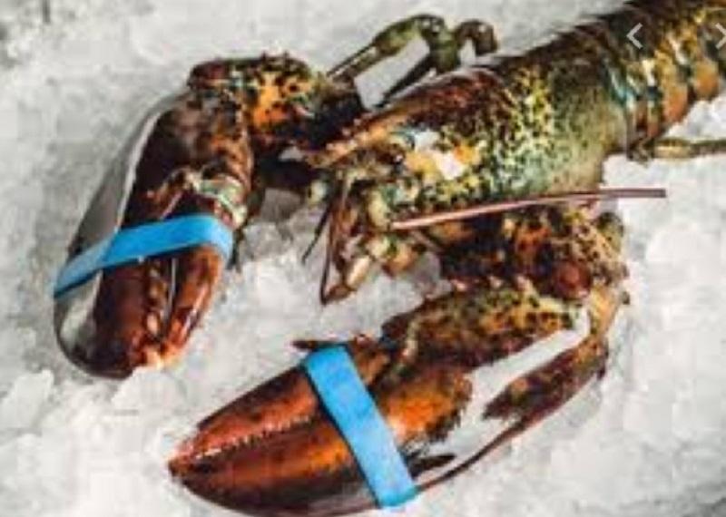 https: img.okezone.com content 2021 02 09 455 2359349 bisnis-lobster-saat-imlek-tak-se-cuan-dulu-Ir0wTk5EkU.jpg