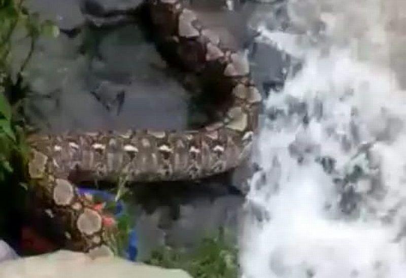 https: img.okezone.com content 2021 02 10 338 2359588 ular-piton-segede-pohon-di-petamburan-belum-ditemukan-pUJOjMeD7O.jpg