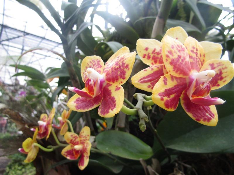 https: img.okezone.com content 2021 02 12 470 2360966 6-tanaman-hias-yang-cocok-untuk-dekorasi-tahun-baru-imlek-0Xq9y81cLL.JPG