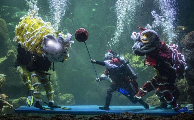 https: img.okezone.com content 2021 02 13 406 2361328 atraksi-barongsai-dalam-akuarium-pukau-pengunjung-sea-world-ancol-Hqp67PIb1c.JPG