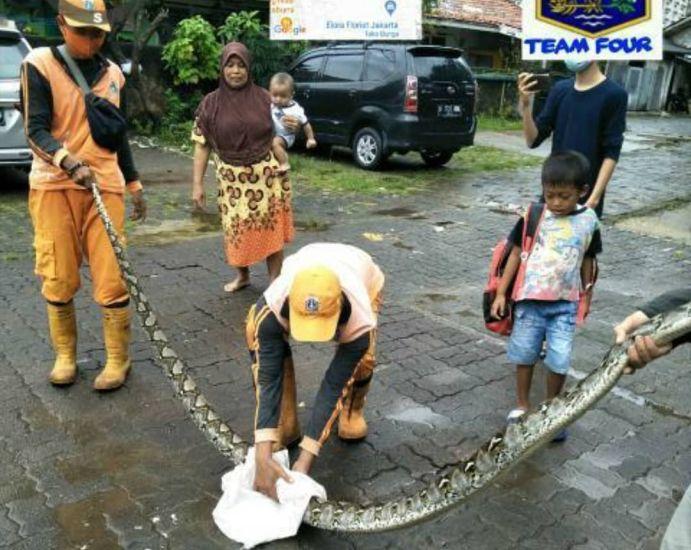 https: img.okezone.com content 2021 02 16 338 2363003 ular-sepanjang-4-meter-muncul-saat-banjir-di-jakarta-barat-jMsv5zGVWT.jpg