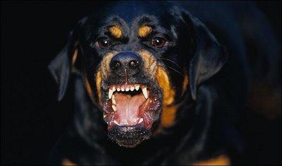 https: img.okezone.com content 2021 02 16 612 2363119 viral-pocong-dikejar-anjing-bisakah-hewan-melihat-mahluk-halus-nplfB4BIwO.jpg