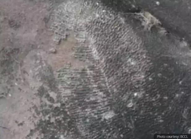https: img.okezone.com content 2021 02 17 406 2363519 fosil-tunggal-hewan-tertua-di-dunia-ditemukan-B5tUJPNTiY.jpg