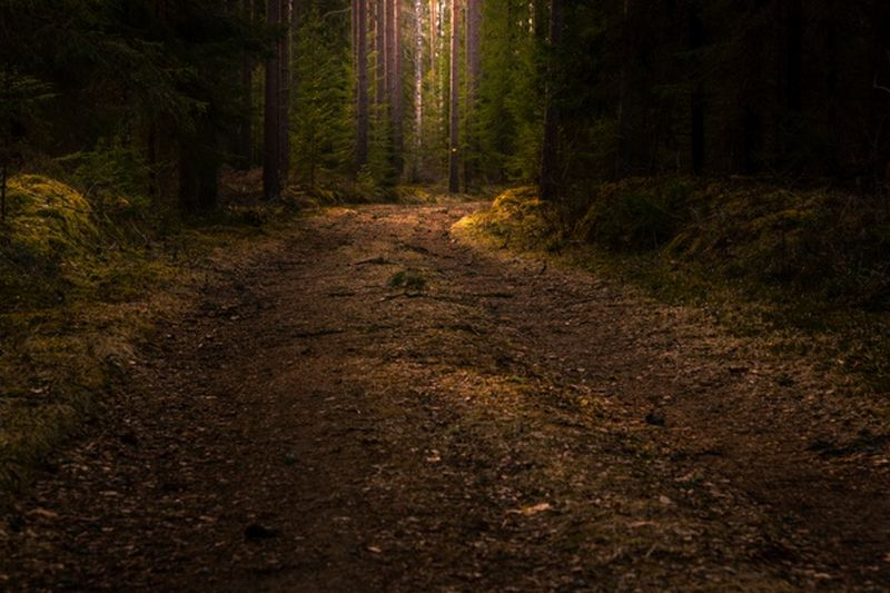 https: img.okezone.com content 2021 02 18 406 2364378 kisah-minibus-3-jam-nyasar-di-hutan-gunung-putri-dibawa-makhluk-halus-GSKUP4GTkc.jpg