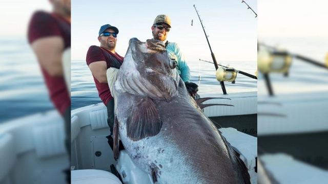 https: img.okezone.com content 2021 02 18 612 2364161 viral-pemancing-tangkap-ikan-monster-raksasa-yang-hidup-di-perairan-dalam-qh6bn8WgkA.jpg