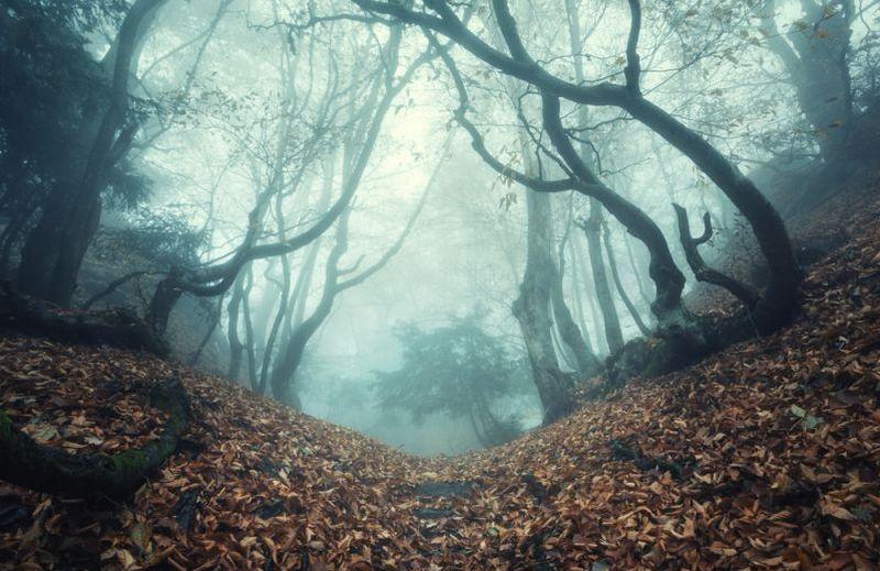 https: img.okezone.com content 2021 02 18 612 2364471 sudah-pakai-google-maps-nyasar-ke-hutan-mahluk-halus-bisa-pengaruhi-gps-g6Jfo2iiWT.jpg