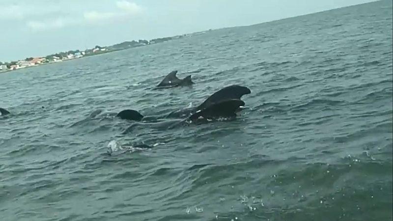 https: img.okezone.com content 2021 02 19 519 2364896 49-ikan-paus-terdampar-di-pesisir-bangkalan-hanya-3-yang-selamat-r6ytBwxsGC.jpg