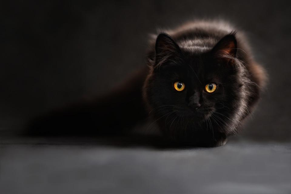 https: img.okezone.com content 2021 02 21 406 2365743 cerita-pramugari-ritual-dengan-kucing-hitam-kemenyan-dan-foto-foto-cowok-I7420eZKBw.jpg