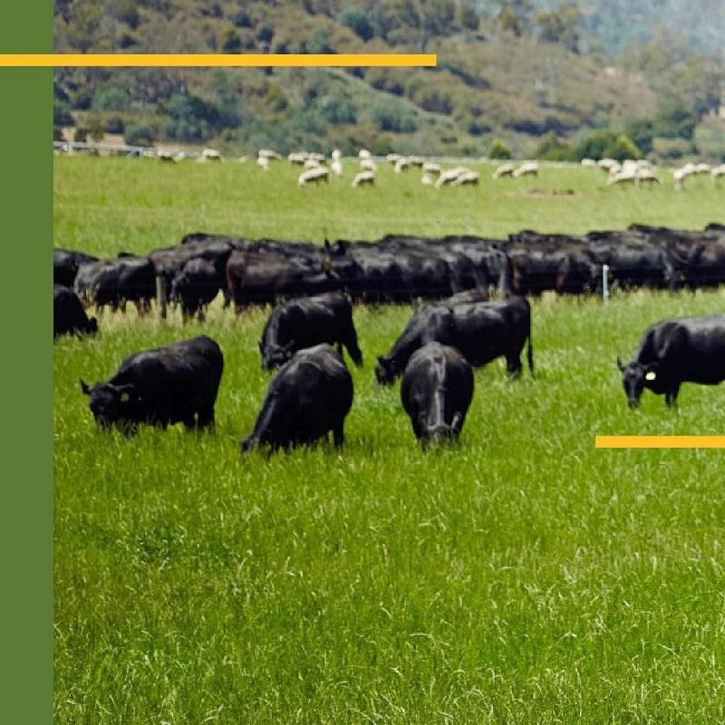 https: img.okezone.com content 2021 02 23 12 2366971 hadirkan-daging-sapi-berkualitas-yuk-intip-peternakan-di-australia-l4curyGrKV.jpg