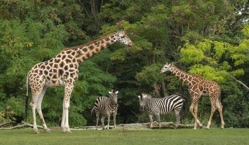 https: img.okezone.com content 2021 02 24 406 2367753 orang-terkaya-india-bangun-kebun-bintang-terbesar-berisi-100-spesies-hewan-XlPtOWukSJ.jpg