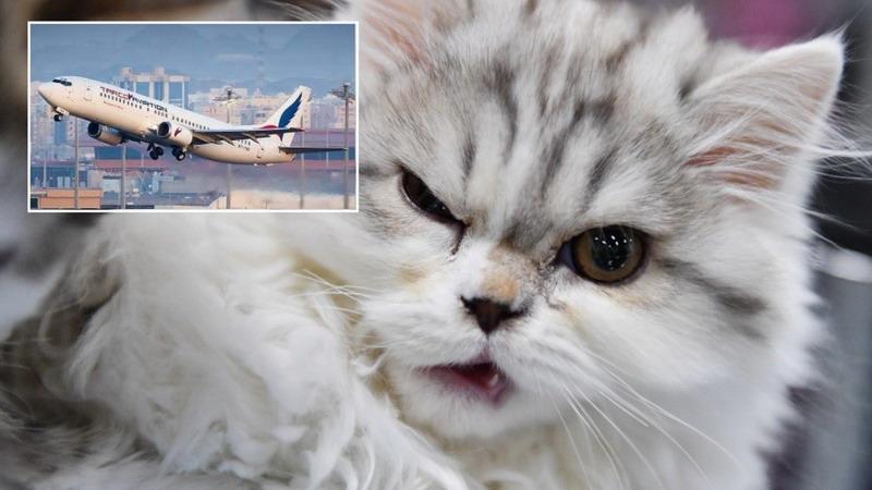 https: img.okezone.com content 2021 03 01 18 2370013 pesawat-mendarat-darurat-setelah-pilot-diserang-kucing-di-dalam-kokpit-ZJFDtpMS60.jpg