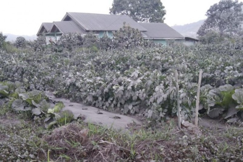 https: img.okezone.com content 2021 03 03 608 2371833 8-desa-terdampak-abu-vulkanik-gunung-sinabung-xTLLzMVepa.jpg