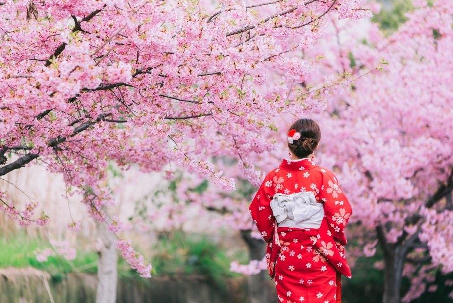 https: img.okezone.com content 2021 03 04 408 2372511 17-destinasi-wisata-menikmati-bunga-sakura-di-indonesia-jepang-hingga-korea-JStMCD60tu.jpg
