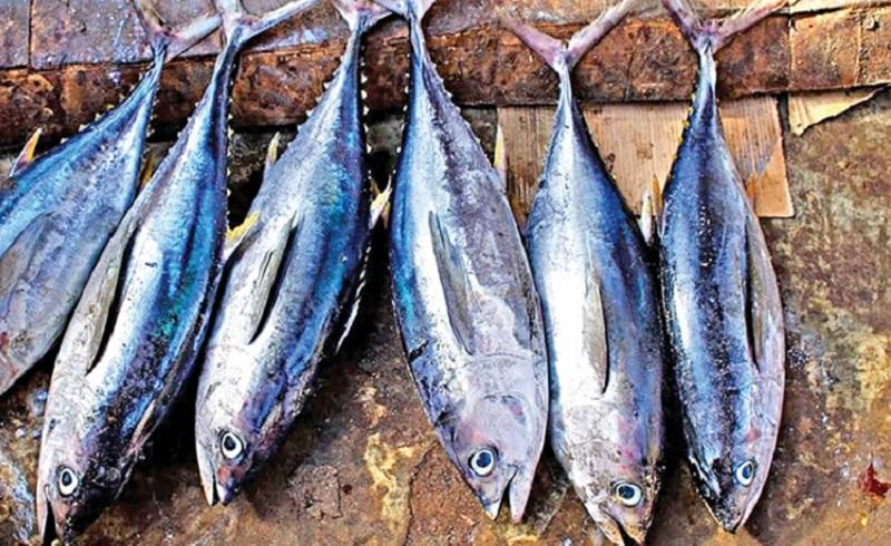 https: img.okezone.com content 2021 03 06 320 2373443 indonesia-penghasil-ikan-tuna-terbesar-dunia-kkp-tancap-gas-daftar-ke-pbb-MU3rYJ9TN3.jpg