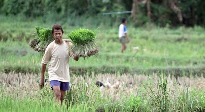 https: img.okezone.com content 2021 03 10 65 2375556 keterbatasan-lahan-pertanian-mahasiswa-ui-rancang-aia-greenhouse-69zgzAW8Y6.jpg