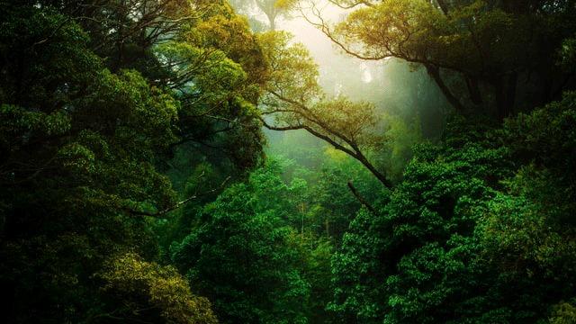 https: img.okezone.com content 2021 03 13 408 2377256 6-misteri-hutan-amazon-sungai-mendidih-dihuni-roh-jahat-hingga-kota-yang-hilang-rMBzZhoWui.jpg