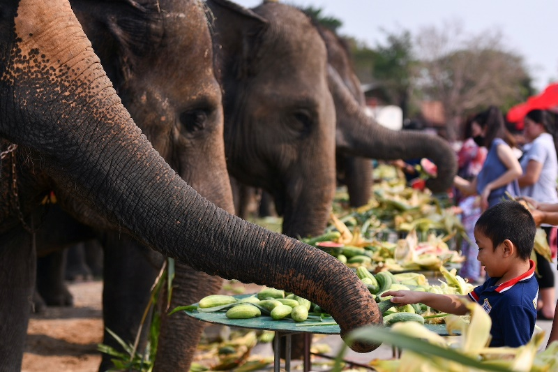 https: img.okezone.com content 2021 03 15 406 2378028 elephant-day-puluhan-gajah-pesta-buah-sPN32jHBqm.jpeg