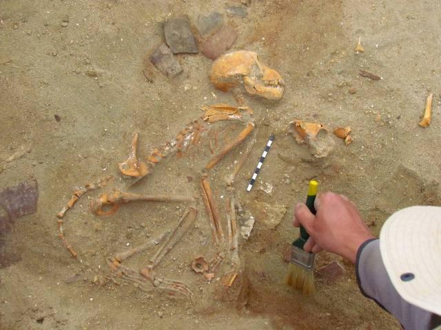https: img.okezone.com content 2021 03 18 612 2379974 ditemukan-kuburan-hewan-peliharaan-tertua-di-dunia-berusia-2-000-tahun-Rvoq3WDUko.jpg
