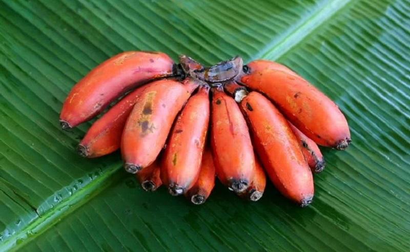 https: img.okezone.com content 2021 03 20 298 2381020 5-manfaat-kesehatan-luar-biasa-pisang-merah-apa-saja-wnu2lPebhe.jpg