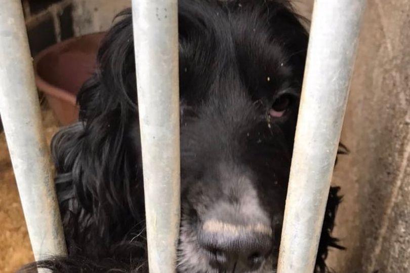https: img.okezone.com content 2021 03 22 18 2381898 gerebek-tempat-wisata-polisi-amankan-83-anjing-yang-dicuri-6-pelaku-ditangkap-tMWFznNY72.jpg