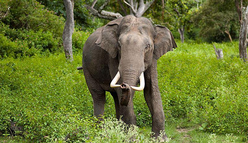 https: img.okezone.com content 2021 03 28 340 2385571 kawanan-gajah-liar-rusak-rumah-dan-pertanian-warga-aceh-2WtZ8QEVFx.jpg