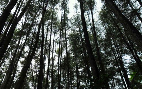 https: img.okezone.com content 2021 03 29 320 2385844 jaga-ketahanan-pangan-kawasan-hutan-berkurang-dipertanyakan-XGqRpClTVh.jpg