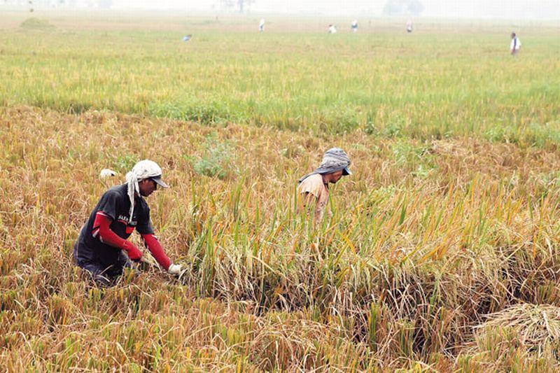 https: img.okezone.com content 2021 03 29 320 2385925 hingga-hari-ini-bulog-serap-200-000-ton-beras-hasil-panen-petani-MeAcqUkJgC.jpg