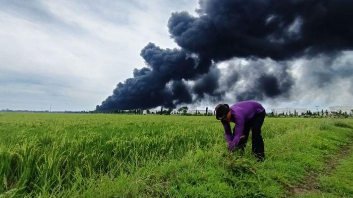 https: img.okezone.com content 2021 03 30 525 2386688 di-tengah-kobaran-api-kebakaran-kilang-minyak-balongan-warga-ini-asyik-ngarit-rumput-9mSk5qx3rH.jpg
