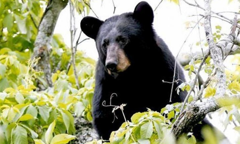https: img.okezone.com content 2021 04 01 18 2387762 diserang-virus-misterius-beruang-jadi-sangat-ramah-terhadap-manusia-OfIBKFlgEg.jpg