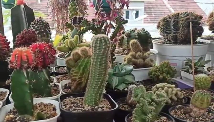 https: img.okezone.com content 2021 04 02 470 2388422 7-jenis-tanaman-hijau-yang-cocok-untuk-dekorasi-ruangan-QCyrlIrZoi.jpg