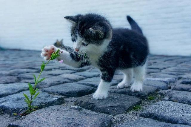 https: img.okezone.com content 2021 04 02 612 2388560 menakjubkan-ini-yang-terjadi-ketika-kucing-dipanggil-namanya-tey0UZEq4T.jpg