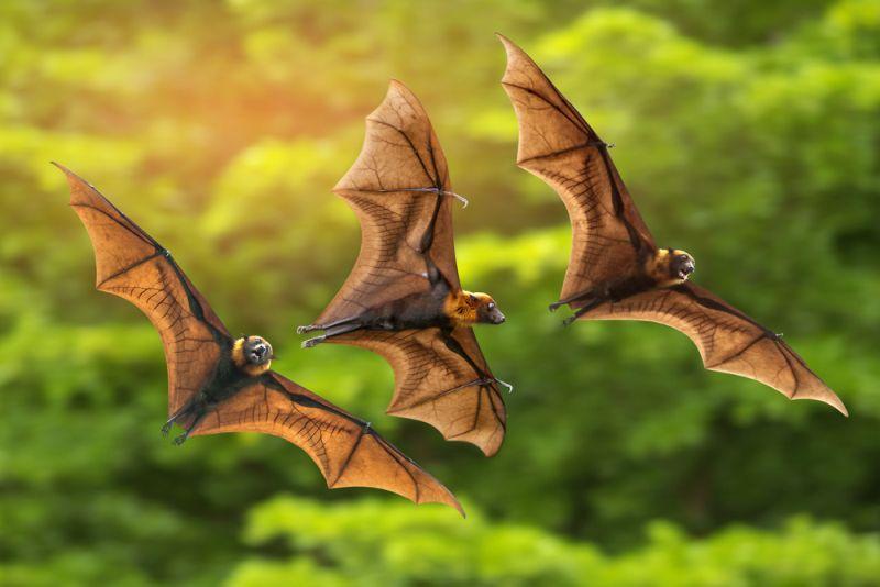 https: img.okezone.com content 2021 04 04 612 2389246 terungkap-kelelawar-ternyata-tidak-bisa-terbang-dari-darat-24vCI1HgtQ.jpg