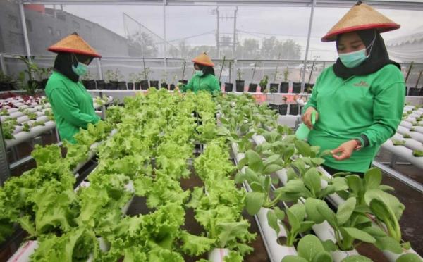 https: img.okezone.com content 2021 04 05 455 2389617 urban-farming-bisa-hasilkan-cuan-kenali-jenis-metode-penanamannya-B8drHmjL7k.jpg