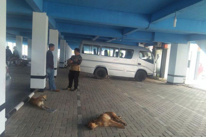 https: img.okezone.com content 2021 04 06 340 2389900 puluhan-warga-mukomuko-bengkulu-digigit-hewan-rabies-wVi4crCZOB.jpg