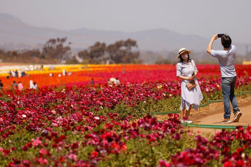https: img.okezone.com content 2021 04 07 406 2390976 taman-berisi-70-juta-bunga-kembali-dibuka-untuk-wisata-2xw4wGTZi8.jpg