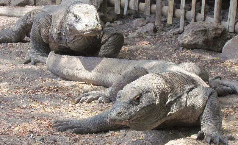 https: img.okezone.com content 2021 04 07 549 2390626 explore-komodo-pulau-eksotis-di-timur-indonesia-Yq0BPYVI28.jpg
