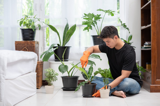 https: img.okezone.com content 2021 04 07 612 2390899 3-perangkat-cerdas-ini-bikin-tanaman-hias-tumbuh-segar-di-dalam-ruangan-VZqfE7uZoB.jpg