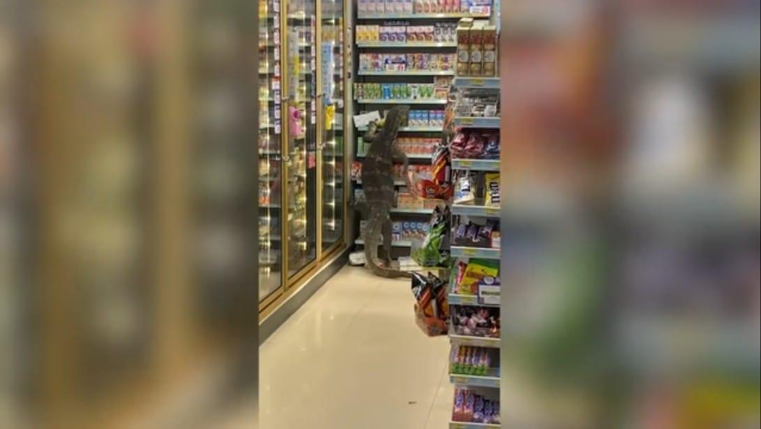https: img.okezone.com content 2021 04 08 18 2391552 viral-biawak-raksasa-hebohkan-pengunjung-supermarket-QNsLa8uQRa.jpeg