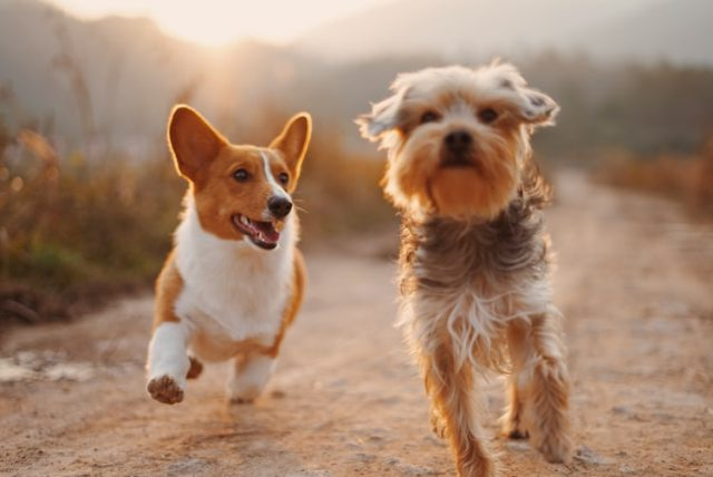 https: img.okezone.com content 2021 04 10 612 2392556 anjing-sering-mengubur-benda-benda-ternyata-ini-alasannya-ZD3vKrkAGM.jpg