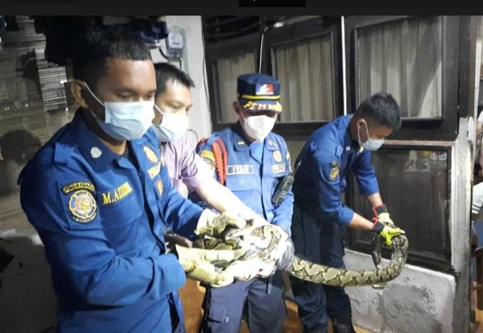 https: img.okezone.com content 2021 04 14 338 2394232 heboh-ular-sanca-berukuran-besar-masuk-ke-mesin-air-warga-di-cipete-0NEUohEwtd.jpg