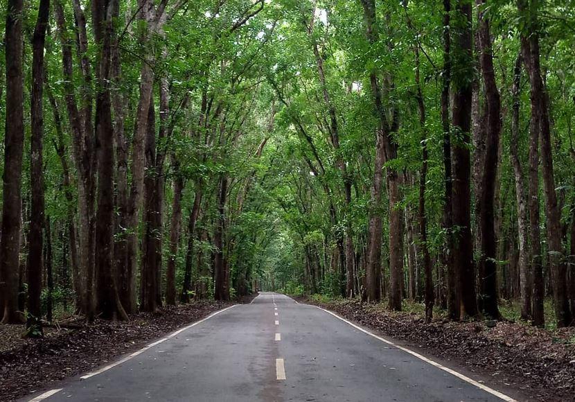 https: img.okezone.com content 2021 04 15 406 2394915 pemerintah-gandeng-komunitas-kembangkan-wisata-virtual-taman-nasional-jvs39uWcIj.JPG