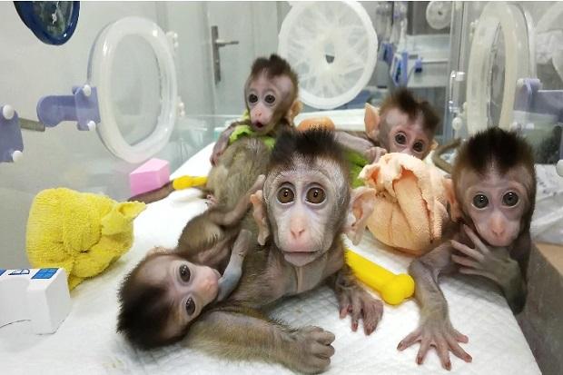 https: img.okezone.com content 2021 04 16 18 2396034 ilmuwan-as-ciptakan-mahkluk-campuran-manusia-monyet-pertama-di-dunia-r45agUB2Eg.jpg