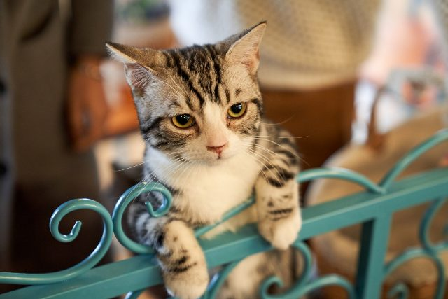 https: img.okezone.com content 2021 04 16 612 2395768 kucing-ini-jadi-kepala-kepolisian-usai-selamatkan-kakek-tercebur-selokan-pCHhoix02s.jpg