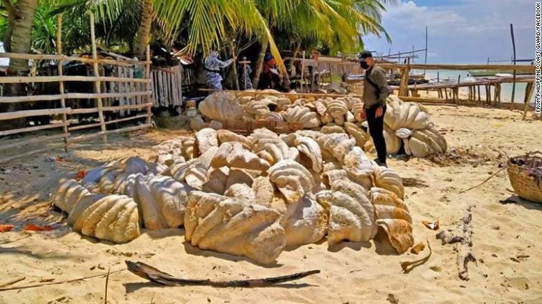 https: img.okezone.com content 2021 04 19 18 2396945 filipina-sita-150-ton-fosil-cangkang-kerang-raksasa-senilai-rp364-miliar-lPxbCxGCY0.jpg