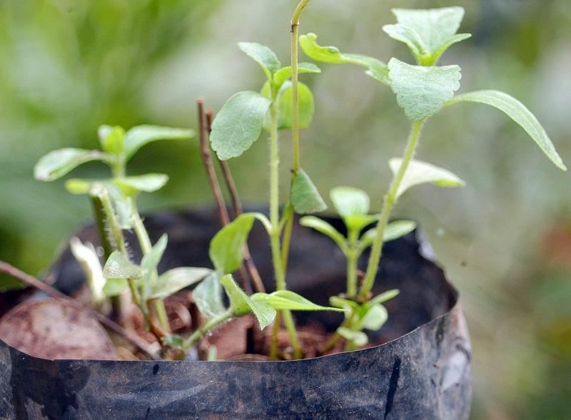 https: img.okezone.com content 2021 04 23 470 2399873 begini-cara-mengatasi-tanaman-yang-terlilit-akar-B5to2wO9PZ.jpg