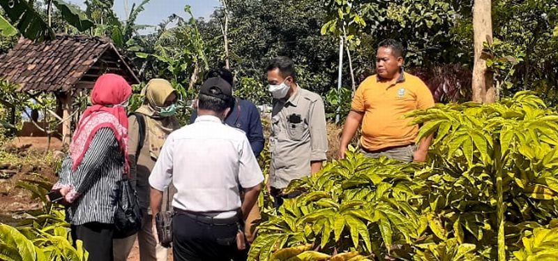 https: img.okezone.com content 2021 04 24 519 2400050 berkah-ramadhan-saat-pandemi-petani-porang-desa-gemarang-dapat-rp5-2-m-hbM8HvIagH.jpg