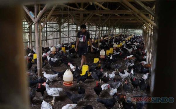 https: img.okezone.com content 2021 04 26 320 2400977 permintaan-daging-ayam-untuk-lebaran-diprediksi-naik-15-GJTs1vypTN.jpg