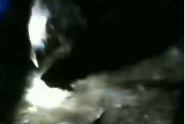 https: img.okezone.com content 2021 04 27 338 2401321 warga-sawangan-depok-geger-tangkap-babi-hitam-di-tengah-malam-7HLnYWB6qc.JPG