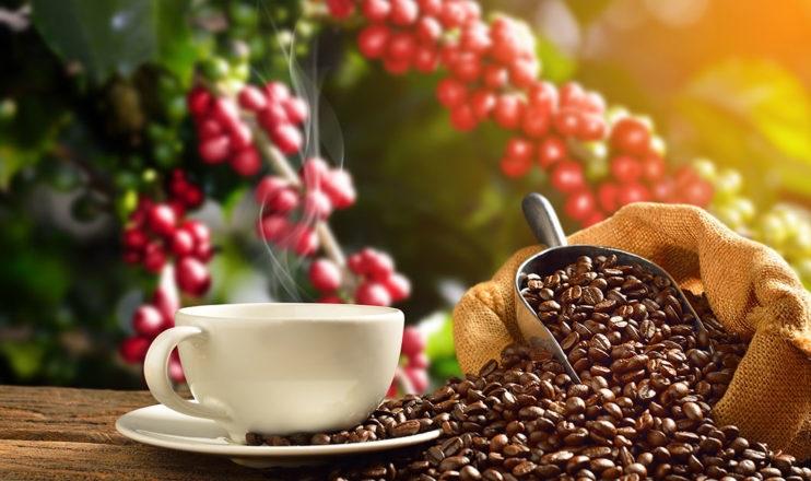 https: img.okezone.com content 2021 04 30 301 2403638 5-perbedaan-kopi-robusta-dan-arabika-dari-aroma-hingga-sejarah-rlCapwl0GN.jpg